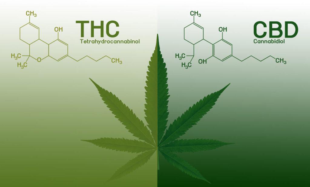 Proporciones de variedades de cannabis con CBD y THC