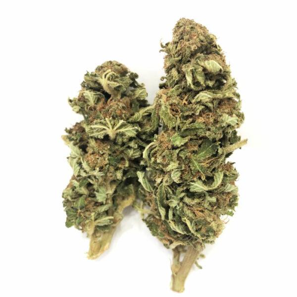 2 cogollos de flor de cbd amnesia